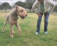 Let Blind, Deaf Dog Back in His Favorite Park!