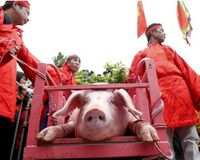 NO CRUELTY TO ANIMALS IN VIETNAM!!!