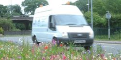 Let grass verges grow wild flowers on side of roads