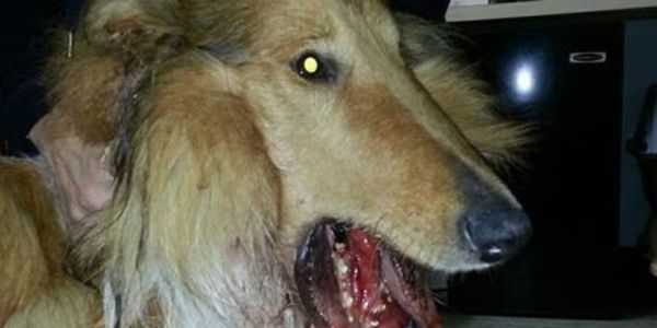 Investigate, Find and Charge Perpetrator Who Shot 8-month Dog in Mouth and left to die!!