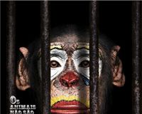 Abolir o uso de animais em circo - Abolish the use of animals in circus