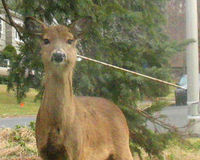 CHALLENGE THE HUNTER HARASSMENT LAW IN PENNSYLVANIA