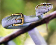 Stop Importing Endangered Reptiles for Skins