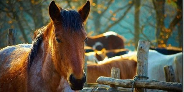 Tell the Judge in New Mexico- Do not Even Consider Reopening Horse Slaughterhouse!!