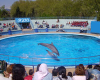 Say NO to a new dolphinarium in France (Montpellier)