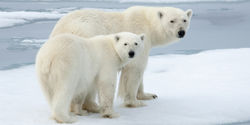 Obama: Grant Permanent Protection to the Arctic National Wildlife Refuge