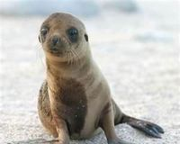Demand protections to save the Stellar Sea Lions