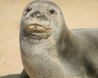 Stop Clubbing Endangered Monk Seals!