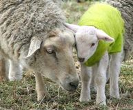 Urge The Jones Group to Stop Selling Cruelly Obtained Australian Wool