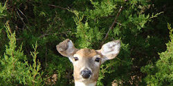 Stop Illegal Deer Hunting in Public Parks