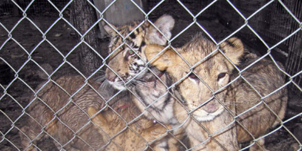 Help Ban Private Ownership of Exotic Pets