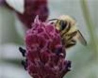 Do Your Part to Preserve Life & All Creation: Help Save Bees