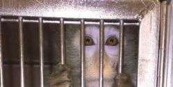 End Animal Experiments at Bristol Myers-Squibb