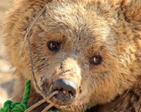 Pledge to Fight Bear Baiting and End Animal Cruelty