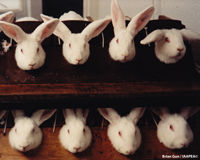 Canada: End Cosmetics Animal Testing