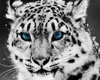 Save the Snow Leopard, Take Action.