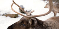 Protect Reindeer from Mass Abuse