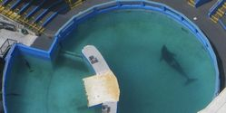 LOLITA THE ORCA NEEDS US AGAIN