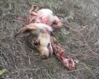 MOLDOVAN DOGS CRUELLY KILLED EVERYDAY!!!