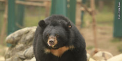 Stop the eviction of Animals Asia's Vietnam bear sanctuary