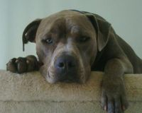 Stop BSL in Broward County