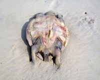 STOP SEA TURTLE DEATH IN BAY OF BENGAL - INDIA
