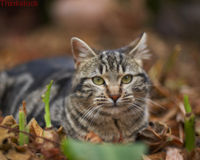 Don't Let Hunters in Victoria Shoot Feral Cats