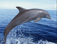 Thank India for Banning Dolphin Captivity