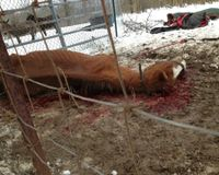JUSTICE! for Hopeless Horses of Serenity Horse Rescue; Miami County Ohio