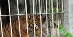 Ban Exotic Animal Ownership in N. Carolina