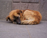 HOMELESS ANIMALS SUFFER ENOUGH - DEMAND TRUE SHELTER AND REFUGE FOR THESE HELPLESS VICTIMS OF AN UNCARING SOCIETY
