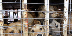 Prevent cruelty to dogs and cats in China
