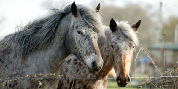 Put a stop to thousands of horses being run over, beaten and neglected on Dublin housing estates!