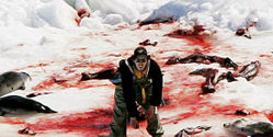 AGAINST BABY SEAL HUNT
