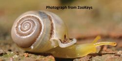Protect Newly Discovered Carnivorous Snails in Thailand