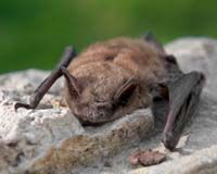 North Carolina: Close the Caves and Save Your Bats!