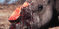 Help save Our Rhino!!!!!!!!!!!!