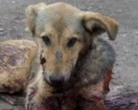 Justice for Bozhidar , shot and tortured as target practice Bulgaria !!