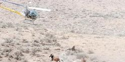 Investigate BLMs Wild Horse & Burro Program NOW!