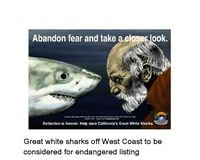 Save California Coast's Great White Shark