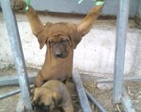 South Korea: Please stop the torture and consumption of dogs and cats