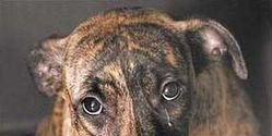 SUPPORT ANIMAL ABUSE REGISTRY LAW