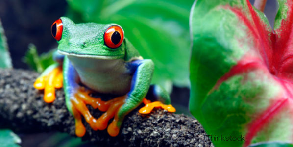 Tell Canadian Company Not to Sue Costa Rica for Protecting Its Rainforest