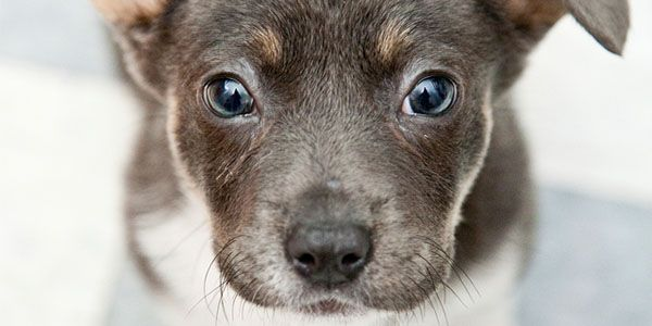 Make the Olympics humane ! STOP Sochi City Hall Orders to kill Stray Dogs