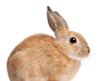 India: Ban Cosmetic Testing of Animals!