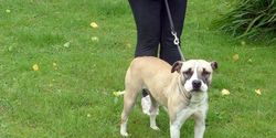 Save Dotty from being murdered under BSL