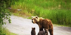 TO END THE CRUEL ACT OF BEAR BAITING FB EVENT MARCH 31ST.
