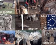 SHUT DOWN the Death Camp in Rasnov-Brasov County,Romania, get rid of DMPA, Flavius Barbulescu&comp