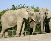 Sanctuary for Toronto Zoo Elephants