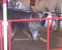 Pour l'interdiction des man�ges � poney